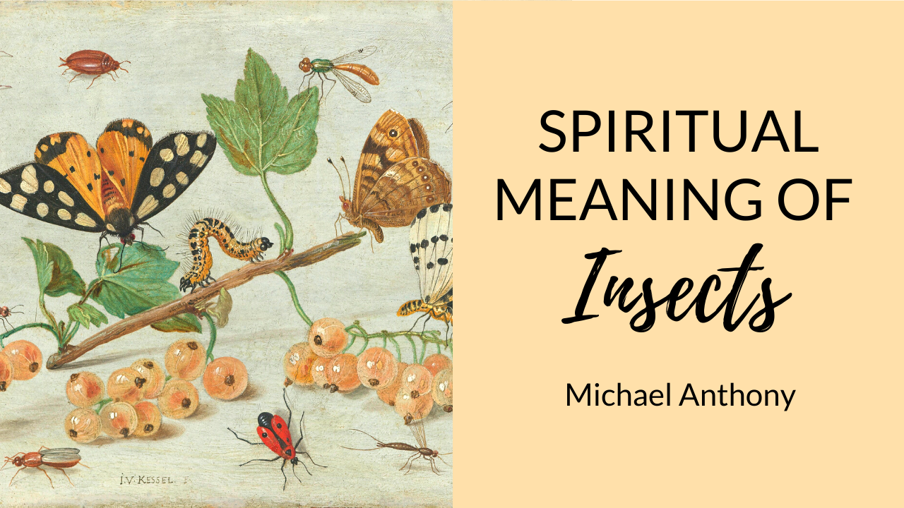 spiritual-meaning-of-insects-spiders-scorpions-worms