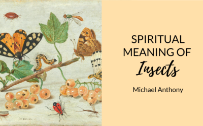 Spiritual Meaning of Insects ? | Spiders, Scorpions, Worms, and more